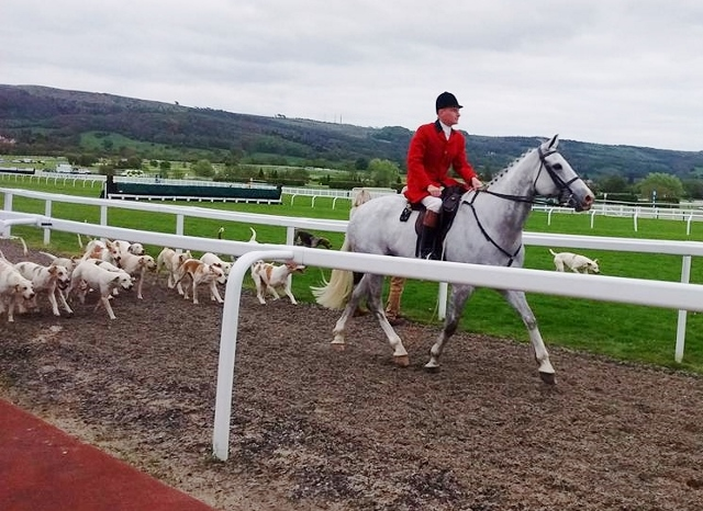 Hound Parade at the 2018 Cheltenham Hunter Chase Evening Meeting- Cotswold Hunt